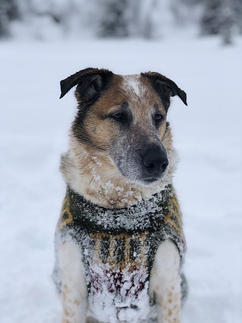 Villmarkshunden